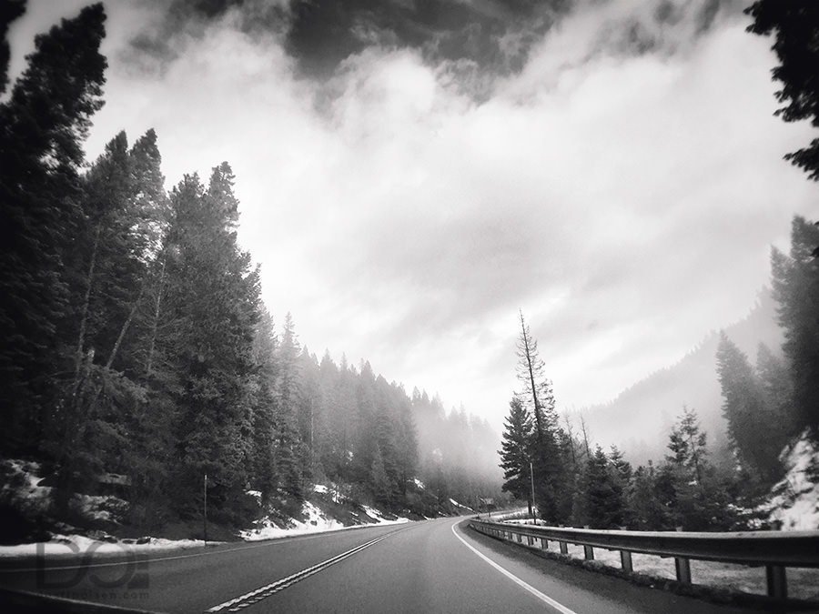 FoggyTrees_McCall-Idaho_DustinOlsen