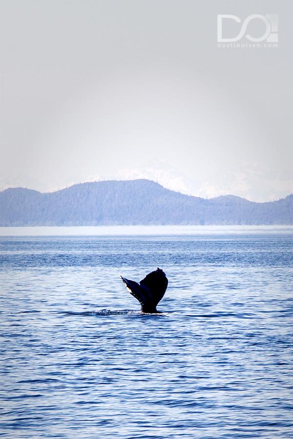 WhaleWatching1_JuneauAK_DustinOlsen