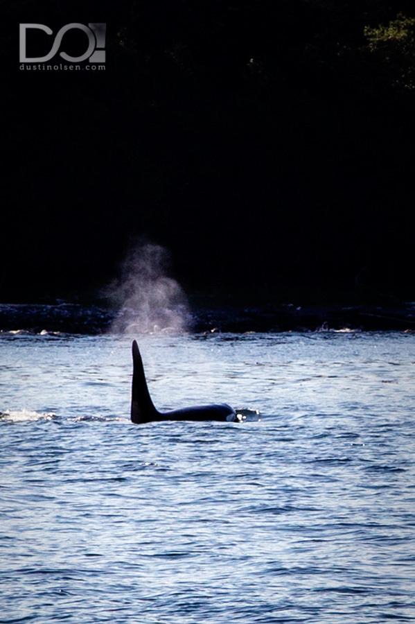 WhaleWatching2_JuneauAK_DustinOlsen