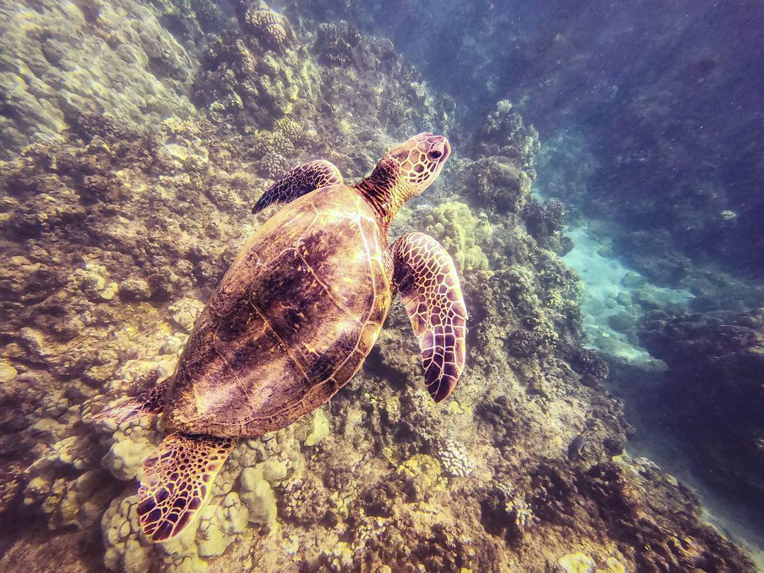 Maui Hawaii 2019
